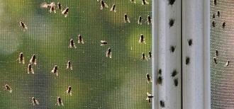 klustervliegen in huis bestrijden