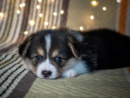puppy ontwormen