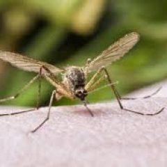 welke insecten steken of bijten