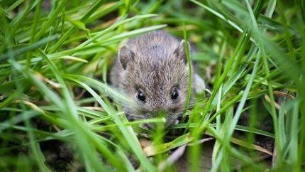 muizen in de tuin