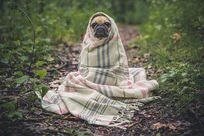 vlooien hond bestrijden met azijn